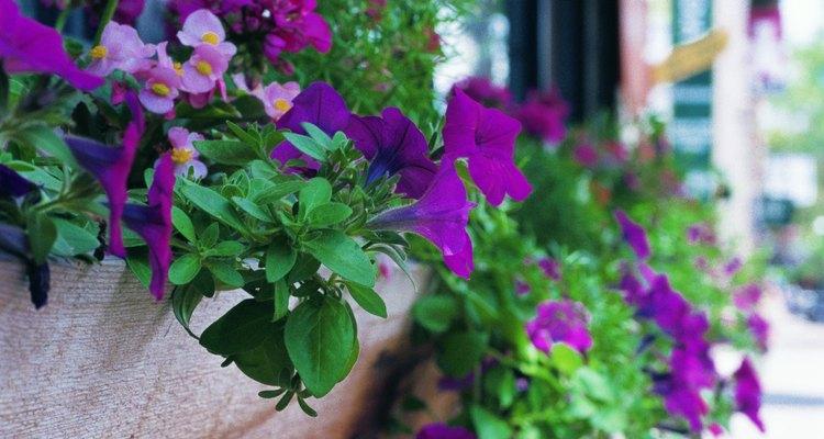 A má floração pode ser causada pela pouca exposição ao sol