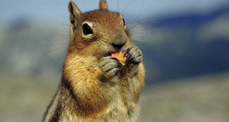 Los animales digieren su alimento en una estructura similar a un estómago.