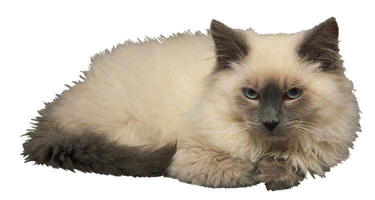Faça gatos pararem de beber água do vaso sanitário utilizando uma estratégia que inibe que eles entrem no banheiro