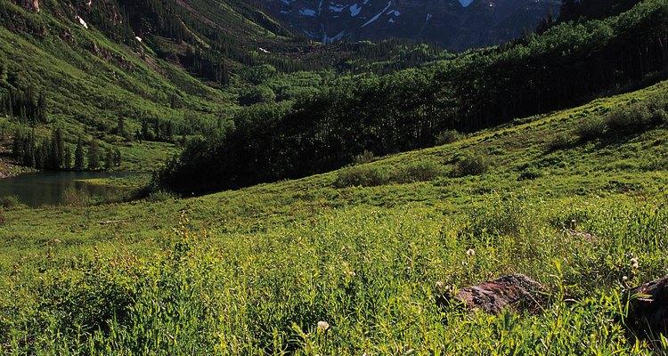 Acampa cerca de las áreas donde se pueda caminar en un entorno pintoresco de Aspen.
