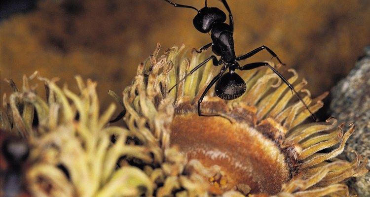 Insectos que se esconden el las alfombras.