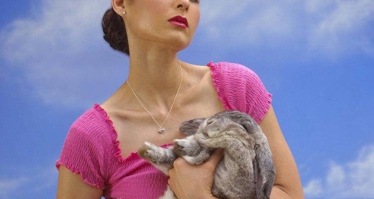 Los gigantes de Flandes son significativamente más grandes que los conejos promedio.