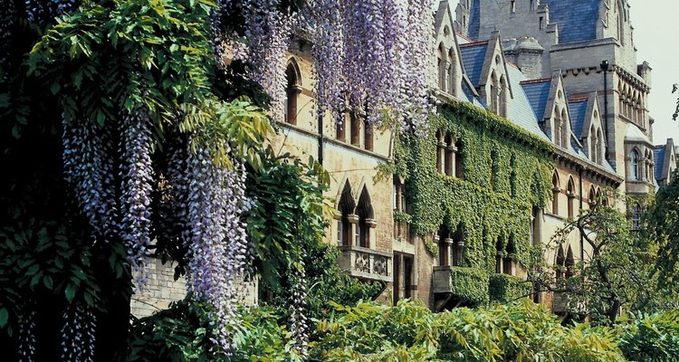 Cascading wisteria offers a dramatic entrance to landscapes and gardens.