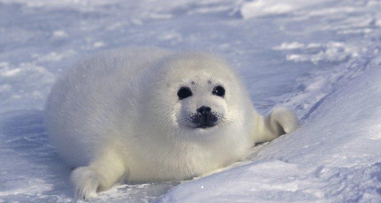 Tanto los animales terrestres como los marinos necesitan oxígeno para sobrevivir.