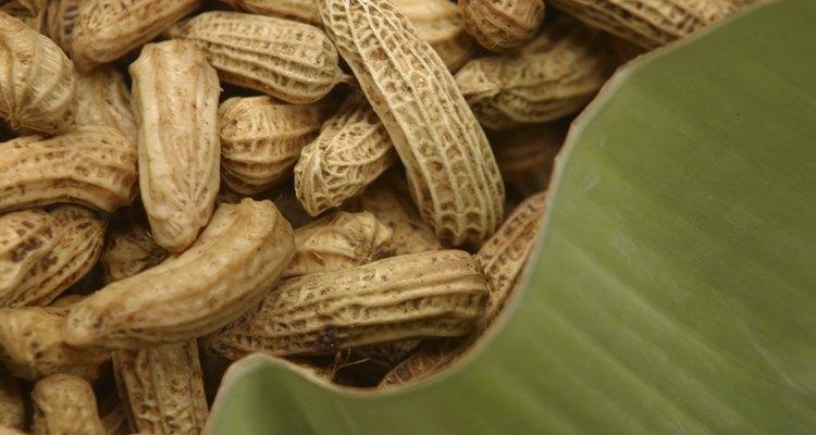O amendoim cru dura mais tempo do que o amendoim torrado