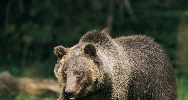 Hay un área del campamento rodeada de una cerca eléctrica anti osos, para protección de los que conducen vehículos vulnerables.