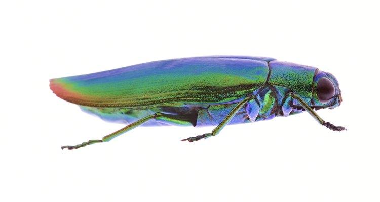 Intenta imitar los colores brillantes de un escarabajo extravagante como este.