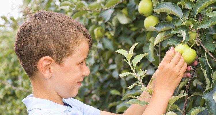 Varios factores pueden limitar la producción de frutos.