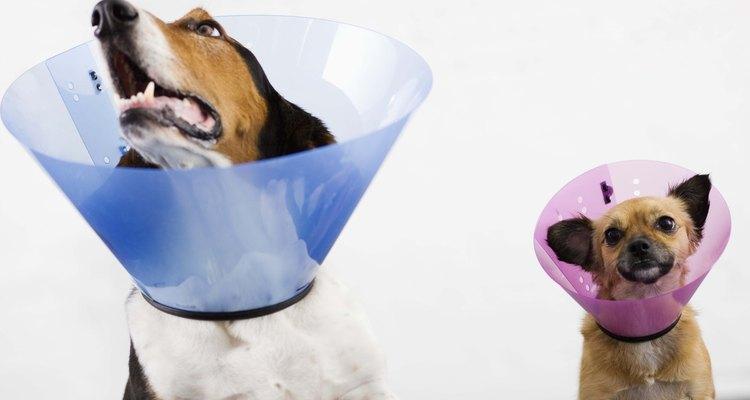 Colares isabelinos, também conhecidos como colares elizabetanos ou cones de cachorro, são um meio popular para impedir que os cães se firam ainda mais ou retirem os pontos de um machucado que esteja cicatrizando