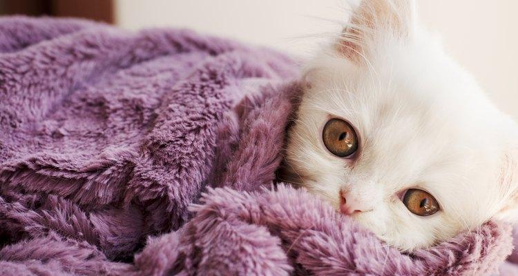 Os gatos devem ser mantidos aquecidos durante a recuperação