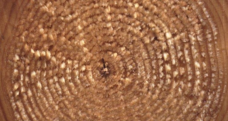 Os anéis em um tronco de árvore são um exemplo natural de círculos concêntricos