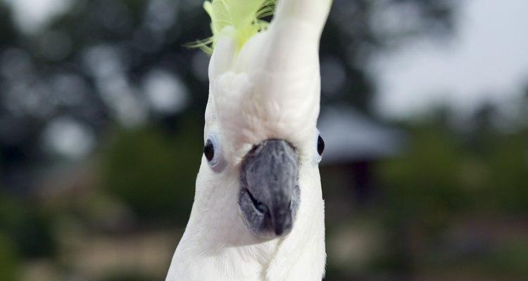Aprende a alimentar correctamente a tu ave.