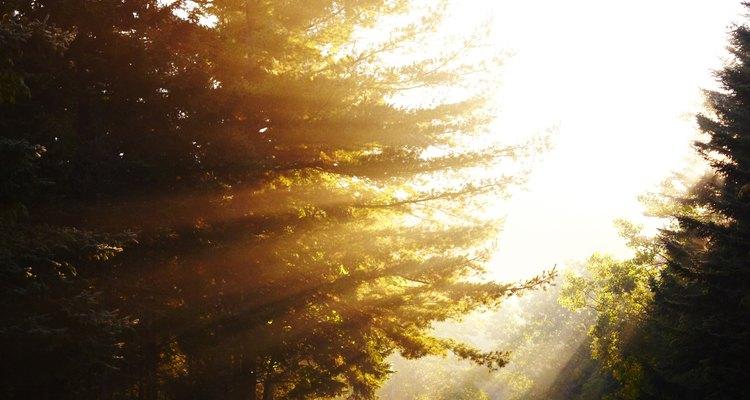 El sol es la fuente de energía fundamental para todas las plantas verdes.