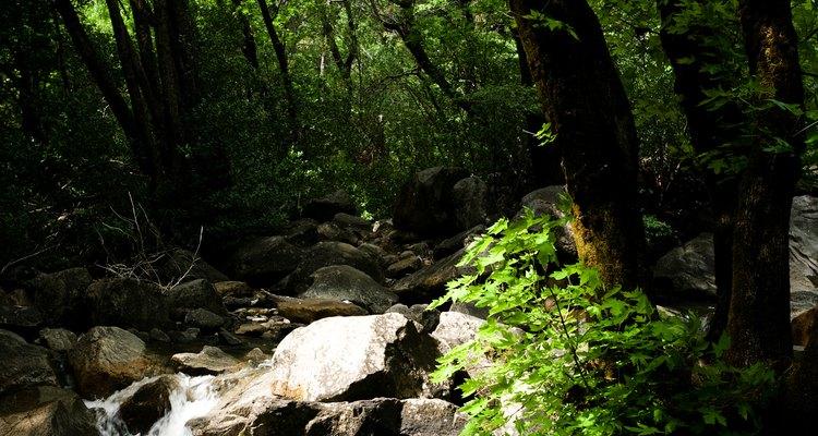 Las caminatas a la sombra que atraviesan arroyos abundan cerca de Porcupine Flat.