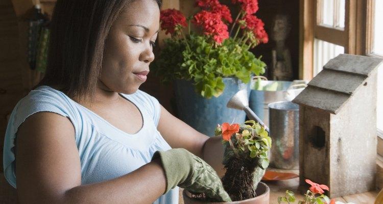 Impermeabilize um vaso de gesso antes de plantar neles