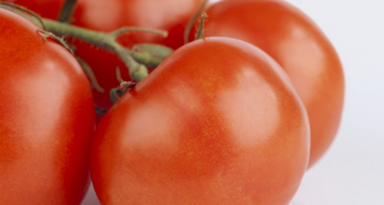 Close-up of tomatoes on the vine