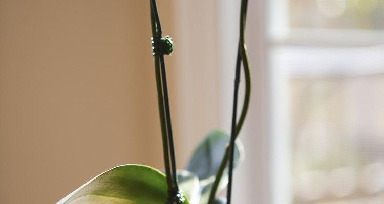 Vasos de orquídea são ótimos presentes