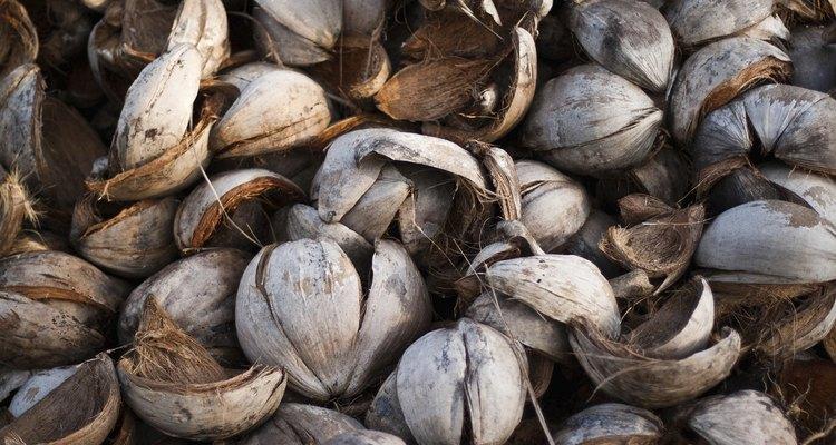 Cascas de coco