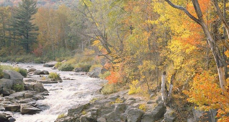 A partir de Seaton Creek puedes emprender excursiones para deleitarte con los hermosos paisajes.