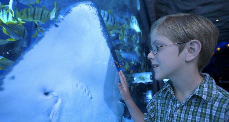 Tampa es hogar de muchas actividades de interior para los niños, incuyendo un acuario y museos.