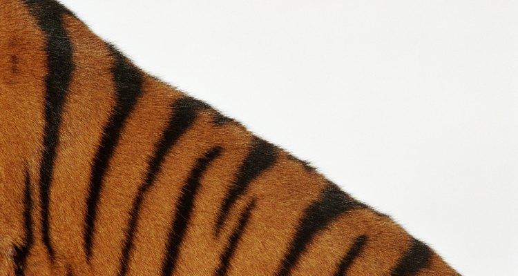 """O Tigrão de """"O Ursinho Pooh"""" talvez seja o mais famoso tigre de todos"""