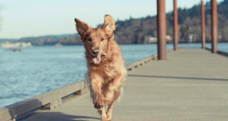 Um cão feliz e saudável