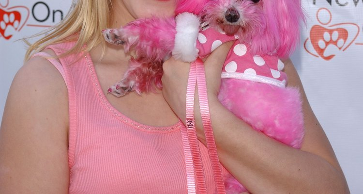 Colorir o animal de estimação é a última moda para donos insatisfeitos com sua aparência