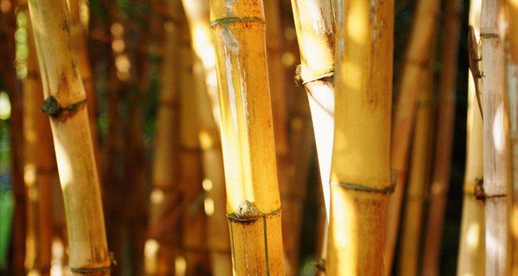 Corte o bambu no comprimento usando uma faca para fazer os postes da barraca