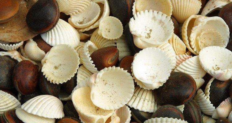 Para fazer seu colar você precisará cortar as conchas com cuidado já que elas quebram com facilidade