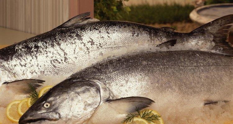 Whole salmon on ice