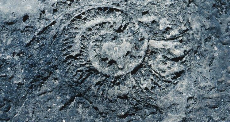 Desde os jogos antigos, os fósseis já eram revividos em laboratórios dentro do jogo