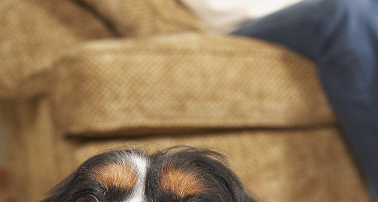 Cachorros velhos as vezes sofrem de insônia e falta de sono
