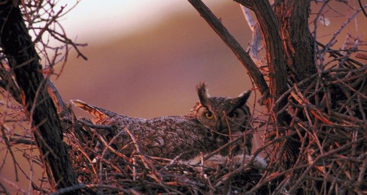 Retira el material de nidificación que no pertenezca a los búhos.