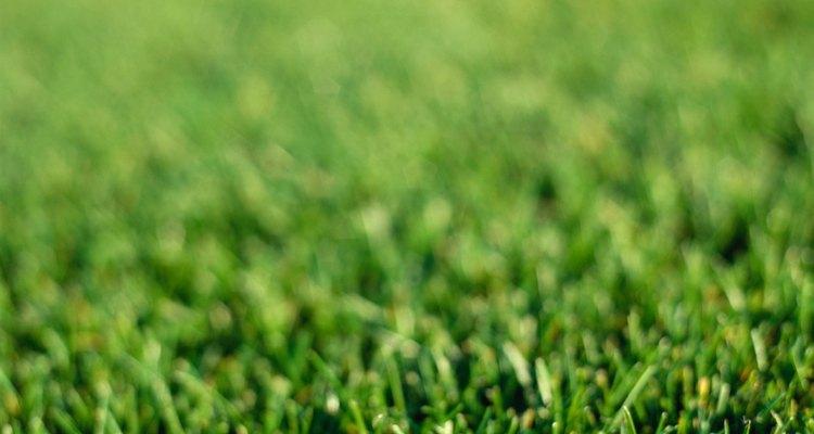 Um gramado viçoso dá outra aparência à propriedade