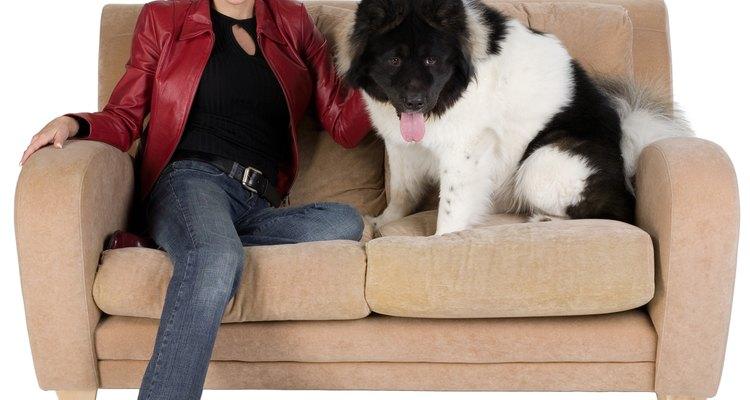 Remova a urina de cachorro dos sofás de camurça