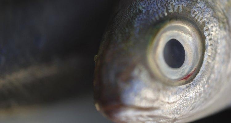 Observa los ojos del pescado.