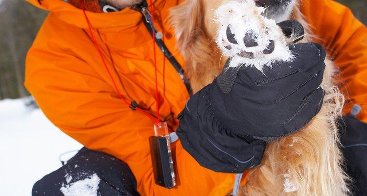 Para alguns cães, climas extremos podem causar ressecamento das patas, que podem descamar