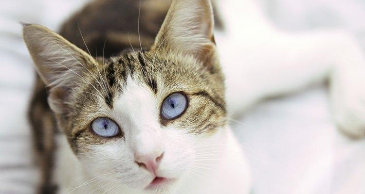 Los gatos de exterior/interior pueden tener una variedad de insectos incluyendo pulgas.