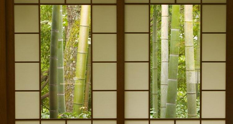 A diferencia de muchas plantas reproducidas, el bambú japonés crece tanto en zonas sombreadas como soleadas.