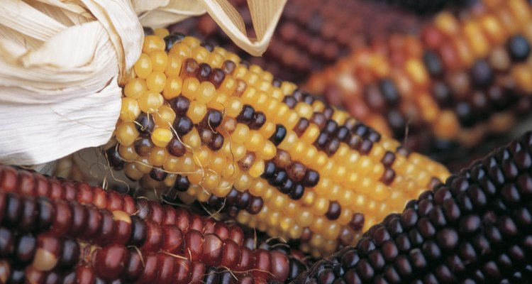 Dried corn makes attractive decorations.