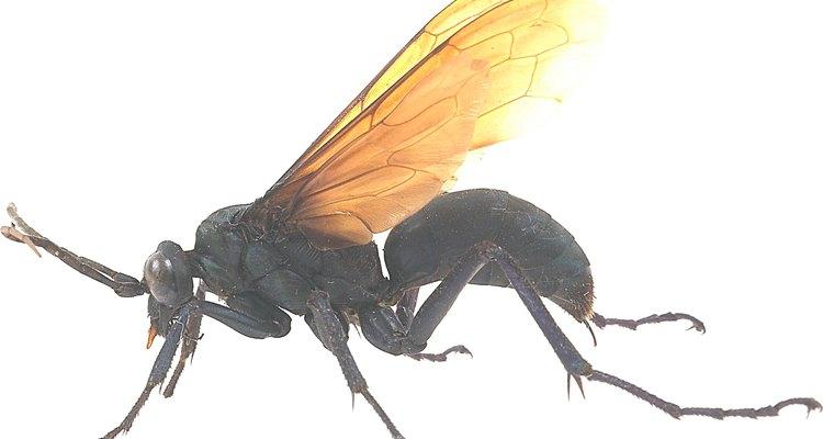 Ser atrapado por un insecto que pica podría ser un accidente, pero es un accidente doloroso.