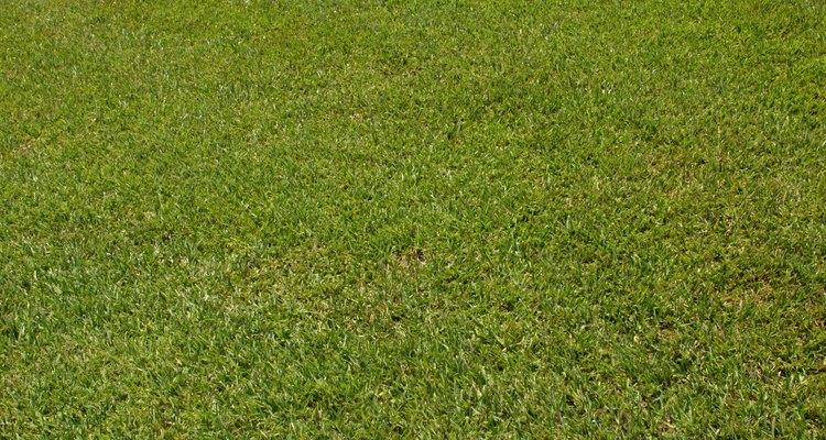 Bone meal is an organic fertiliser for your lawn.