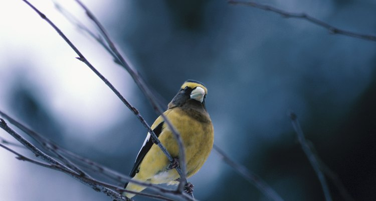 Finches will need a sheltered section in the aviary for protection during bad weather conditions