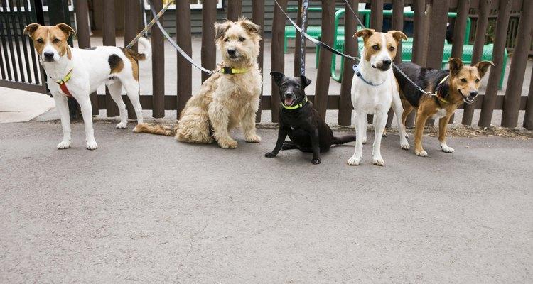 Cachorros são presos de maneira segura para que não andem sem rumo