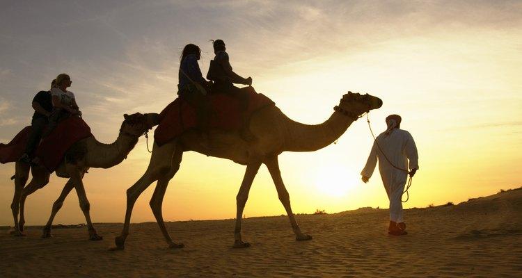 Los beduinos usan a los camellos como transporte para ellos y para los turistas.