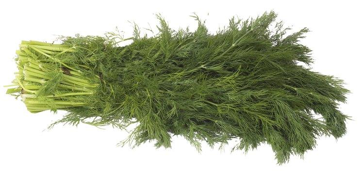 El eneldo es una hierba suave, usada a menudo como aderezo.