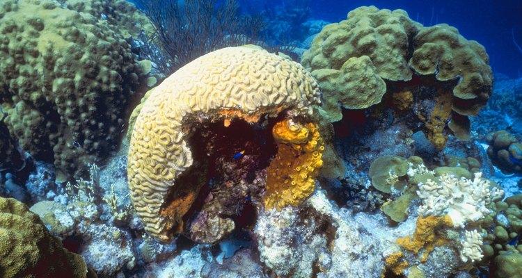 As esponjas criam uma casa para pequenos animais marinhos