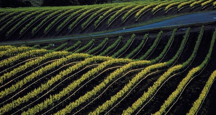 Un viñedo plantado en un terreno inclinado asegura un buen drenaje.
