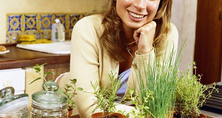 Remojar la semilla de maíz antes de sembrarla incrementará el contenido de agua en la misma, lo que hará germinar la semilla con mayor rapidez .