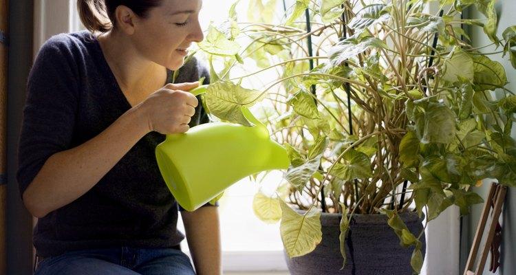Mujer regando planta de interior.